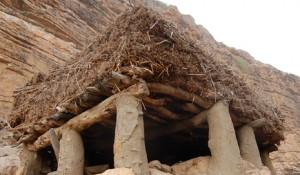 Toguna, l'arbre à palabre au pays Dogon.