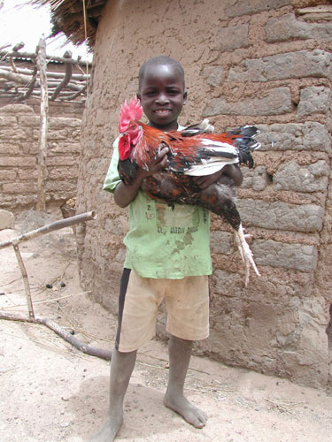 Burkina poulet - Crédit photo: syfia-photos.info
