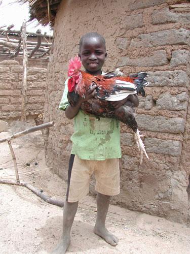 Burkina poulet - Crédit photo: syfia-photos.info